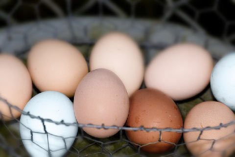 basket of multi-colored eggs